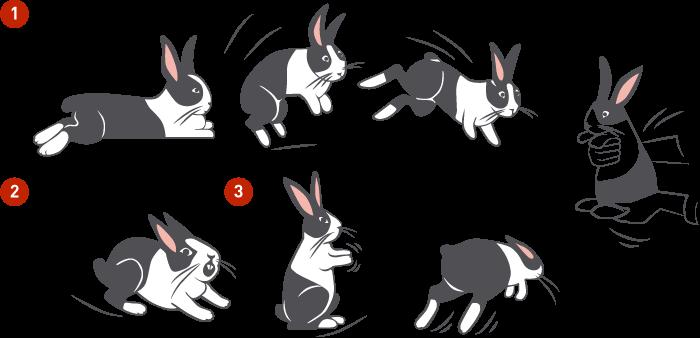 Как общаться с кроликом